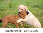 Stock photo playing puppy s 65312785