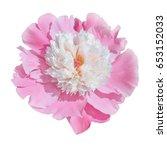 scented fragrant trendy pink... | Shutterstock . vector #653152033