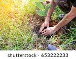 afforest for make a green forest   Shutterstock . vector #653222233