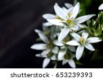 white flowers abstract...   Shutterstock . vector #653239393