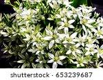 bouquet of white summer flowers   Shutterstock . vector #653239687