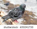 closeup view of grey pigeon...   Shutterstock . vector #653241733