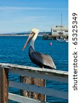 Pelican Perched On Pier...