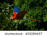 Red Parrot In Fly. Scarlet...