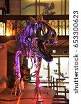 Small photo of Allosaurus skeleton at Royal Belgian Institute of Natural Sciences October 2016, Brussels