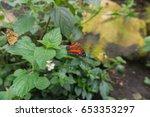 butterflies in a compound in a...   Shutterstock . vector #653353297