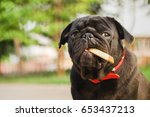 super rich pug dog. funny pug...   Shutterstock . vector #653437213
