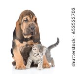 Stock photo cute puppy embracing kitten isolated on white background 653532703