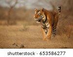 tiger in the nature habitat.... | Shutterstock . vector #653586277