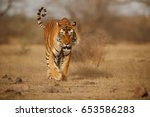tiger in the nature habitat.... | Shutterstock . vector #653586283