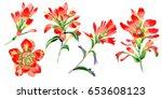 wildflower indian paintbrush...   Shutterstock . vector #653608123
