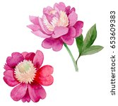 wildflower peony flower in a... | Shutterstock . vector #653609383
