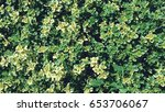 leaves background | Shutterstock . vector #653706067
