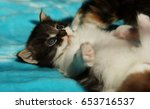 Stock photo kitten 653716537