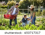 family harvesting produce from... | Shutterstock . vector #653717317