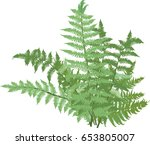 illustration with green fern... | Shutterstock .eps vector #653805007