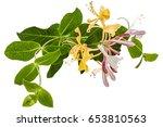 Flowers Of Honeysuckle  Lat....