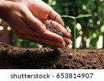 hands of farmer growing and... | Shutterstock . vector #653814907