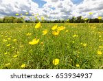 Spring Flowers  Buttercup ...