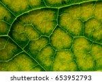 green   yellow leaf macro.... | Shutterstock . vector #653952793