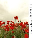 flowers red poppies blossom on... | Shutterstock . vector #653965843