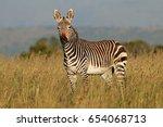 cape mountain zebra  equus... | Shutterstock . vector #654068713