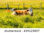 organic farming wiht happy cows ...   Shutterstock . vector #654125857