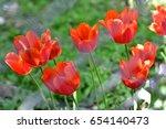 red tulips  | Shutterstock . vector #654140473