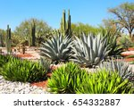 garden of cacti  agaves and... | Shutterstock . vector #654332887