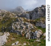 Small photo of Alpine Ibex in the morning in Julian Alps