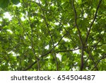 leaves and branch shine green... | Shutterstock . vector #654504487