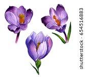 Wildflower Crocuses Flower In ...