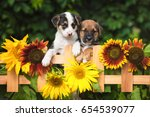 Two Adorable Puppies Looking...