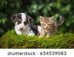 Stock photo little puppy with a little tabby kitten 654539083