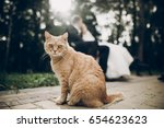 cute red homeless cat looking... | Shutterstock . vector #654623623