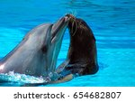 dolphin and fur seal love | Shutterstock . vector #654682807