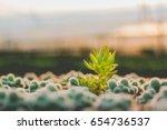 cactus evening   Shutterstock . vector #654736537