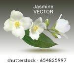 jasmine flower vector... | Shutterstock .eps vector #654825997