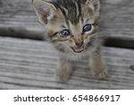 Stock photo meowing kitten 654866917