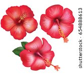 set of red hibiscus flowers | Shutterstock .eps vector #654888613
