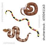 snake north american venomous...   Shutterstock .eps vector #655041163