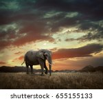elephant with trunks and big... | Shutterstock . vector #655155133