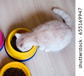 cat eating pet food in a bowl.... | Shutterstock . vector #655169947