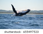 humpback whale i | Shutterstock . vector #655497523