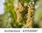 white vine grape | Shutterstock . vector #655540087