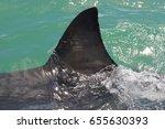 dorsal fin of great white shark ... | Shutterstock . vector #655630393