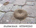 Small photo of Ant colonies build and accumulate on outdoor walkways/Ant Infestation and Outdoor Infrastructure/Ant colonies build and accumulate on outdoor walkways.