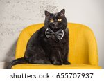 Stock photo black cat black cat with butterfly on the neck 655707937