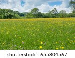 askrigg hay meadows | Shutterstock . vector #655804567