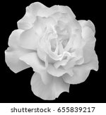 Stock photo white rose 655839217